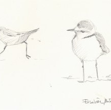 Abstracts of the first National Conference on Kentish Plover held in Bracciano (Rome)-Italy- in September 2010