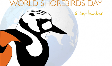 World Shorebirds' Day 06 settembre 2014